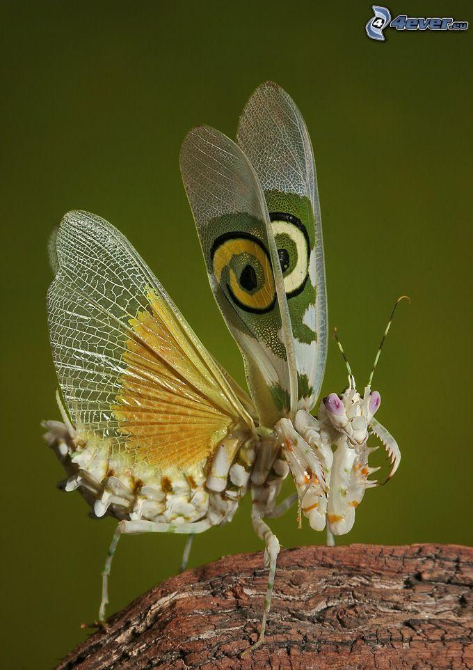 motyl, owady, drewno
