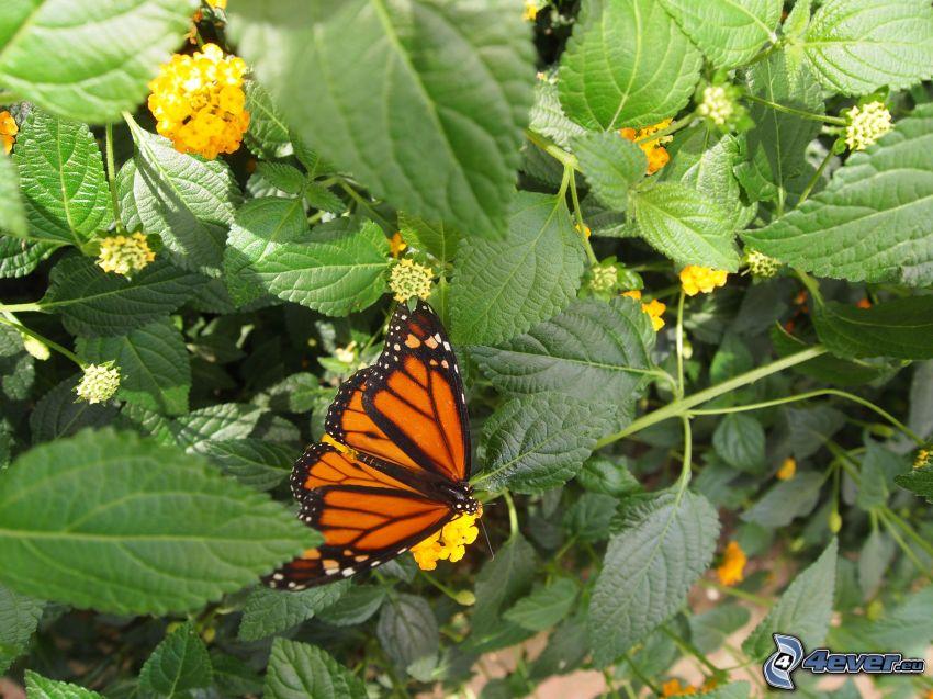 motyl, rośliny, żółte kwiaty