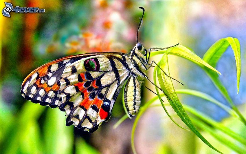 motyl, źdźbła trawy