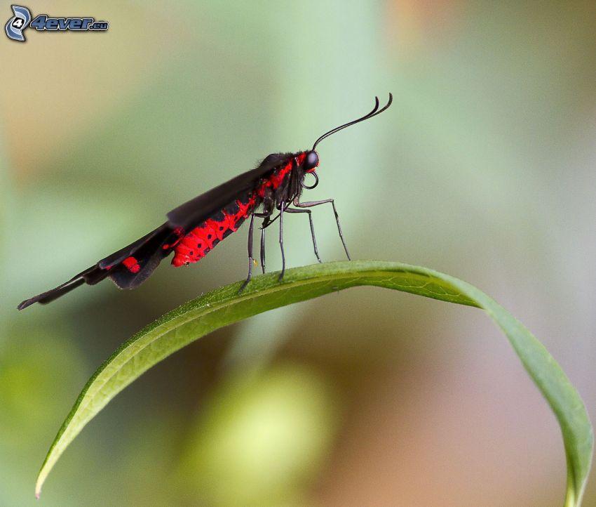 motyl, zielony liść