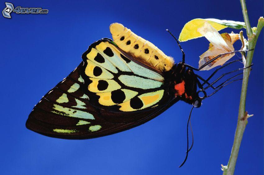 Motyl na kwiatku, makro