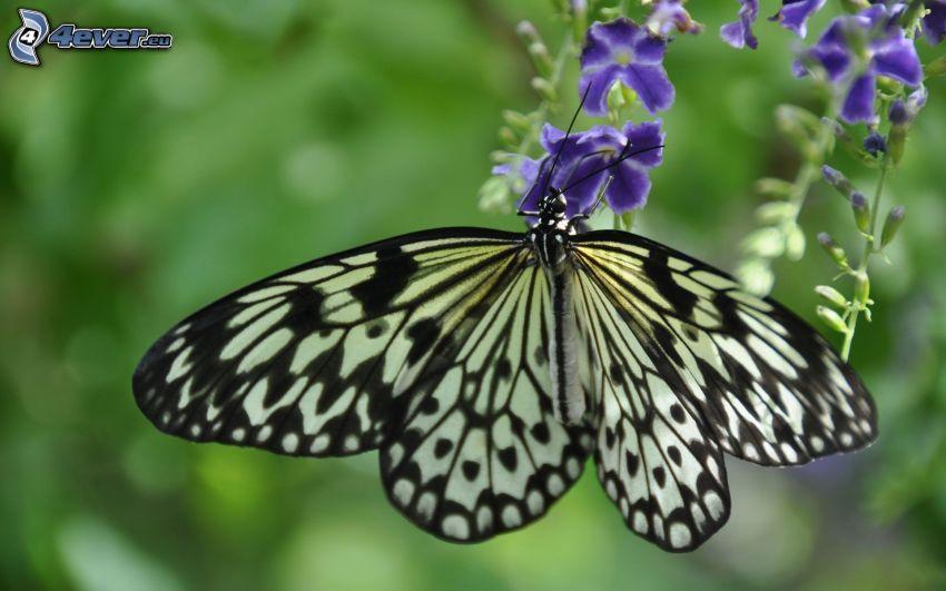 Motyl na kwiatku, niebieski kwiat, makro
