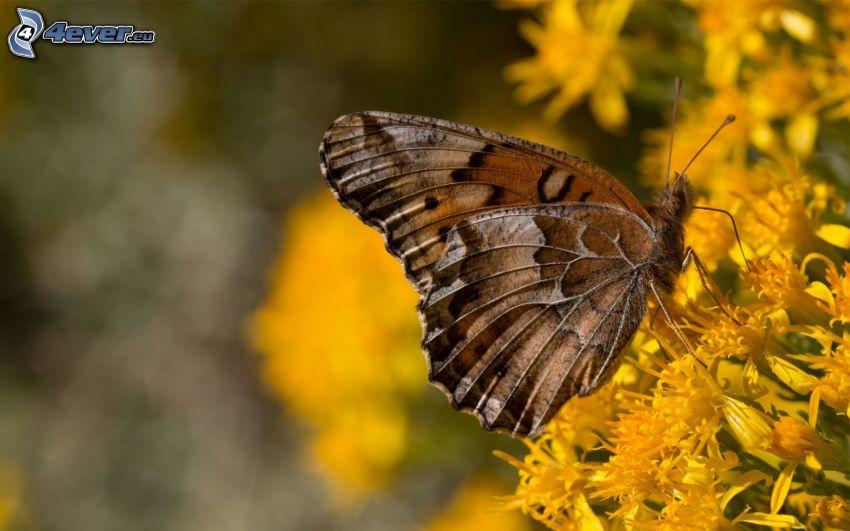 Motyl na kwiatku, żółte kwiaty