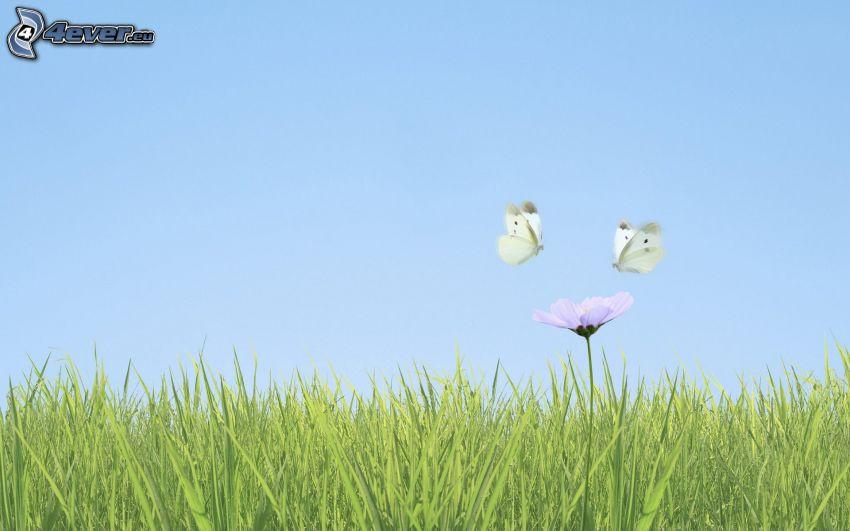 Motyle, biały kwiat, trawa