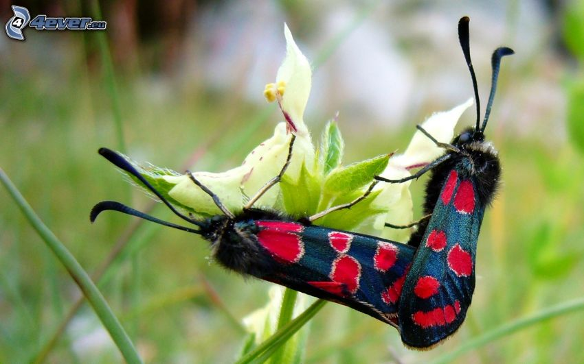 Motyle, kwiat, owady