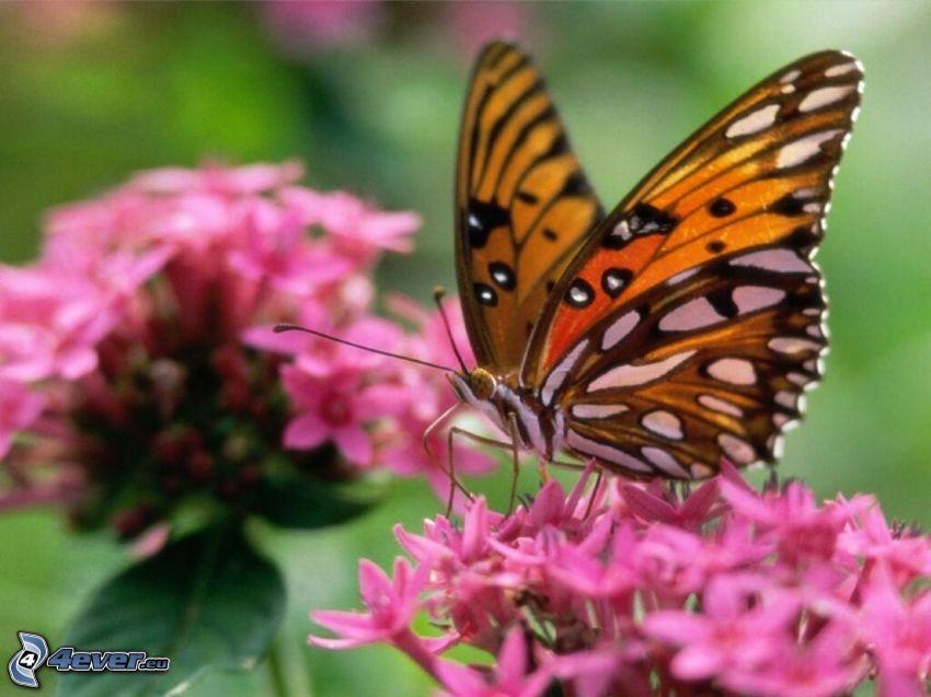 Motyle, różowe kwiaty
