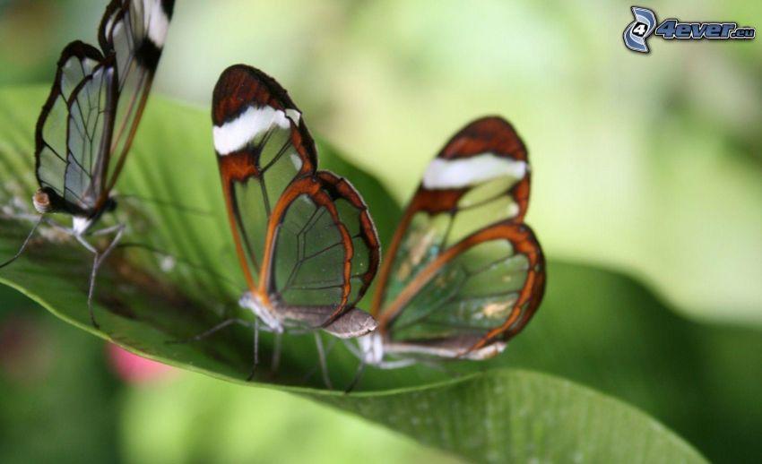 Motyle, zielony liść