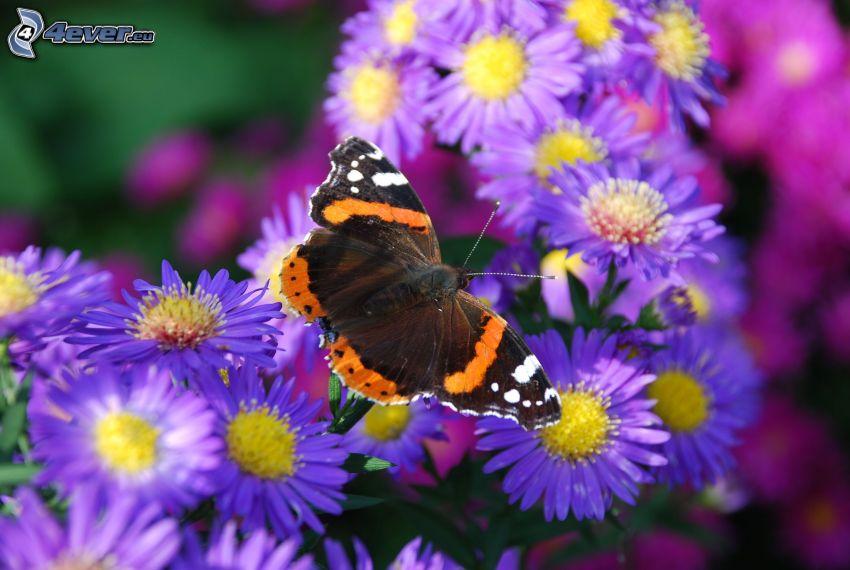 motyle na kwiatach, fioletowe kwiaty