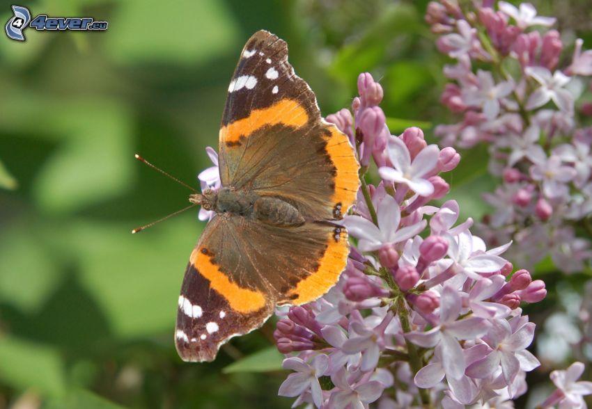 motyle na kwiatach