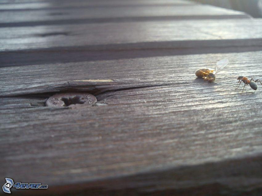 mrówka, osa, owady, drewno, gwóźdź