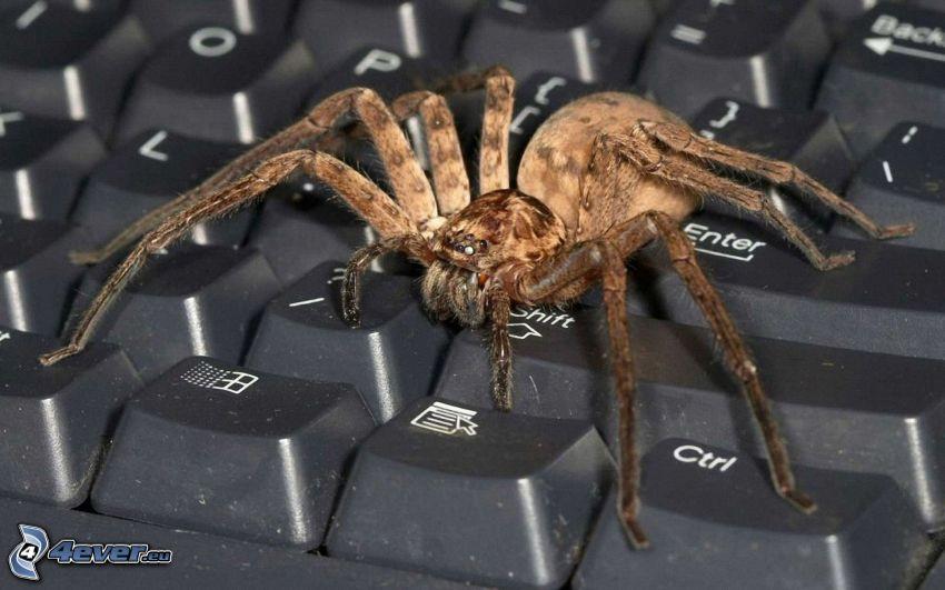 tarantula, klawiatura