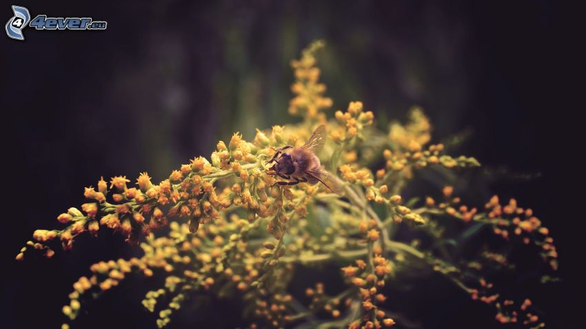 trzmiel, roślina