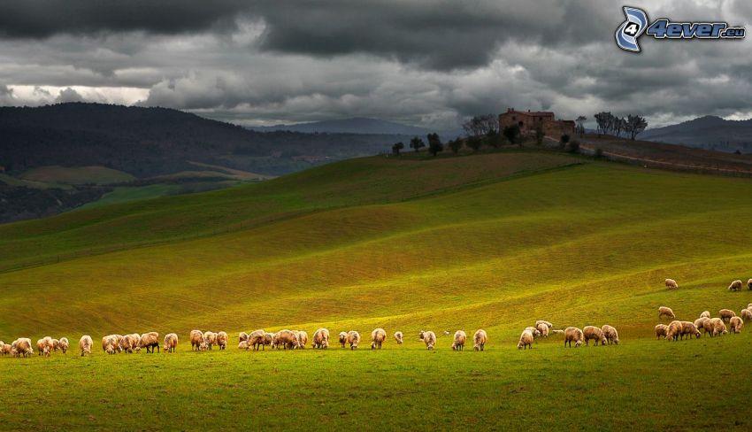 owce, łąka, wzgórza, chmury, dom na wzgórzu