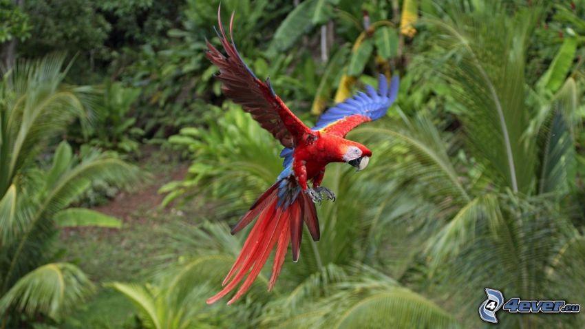 papuga, dżungla