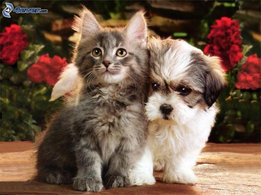 pies i kot, czerwone kwiaty
