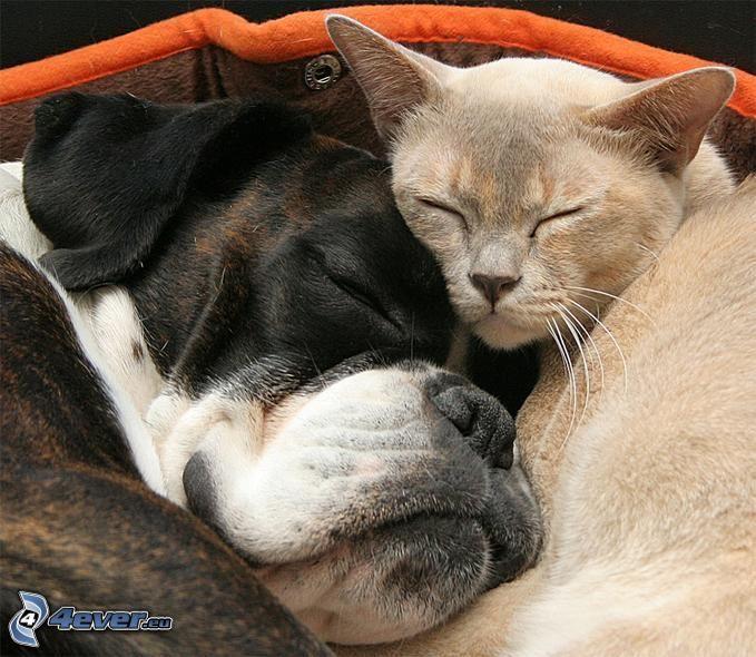 pies i kot, spanie