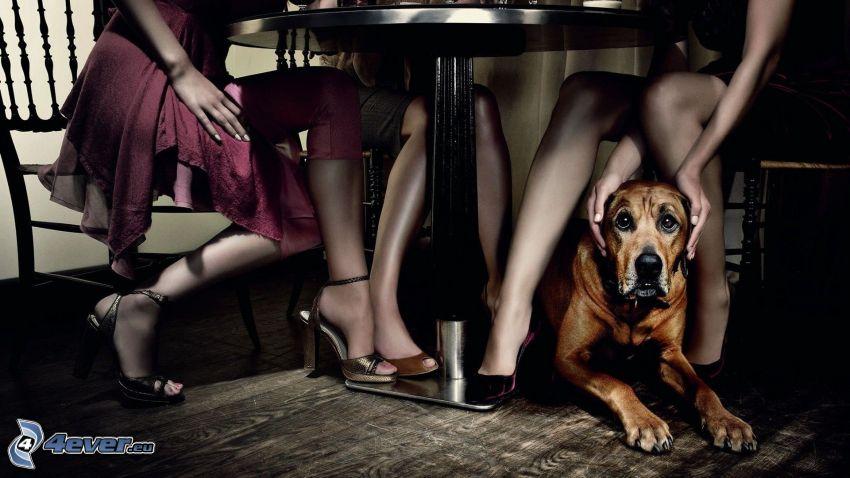 brązowy pies, ręce, nogi