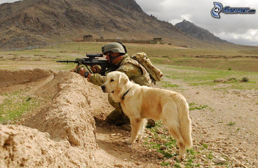 Labrador, żołnierz