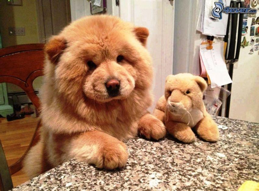 pies chow-chow, pluszowa zabawka, stół