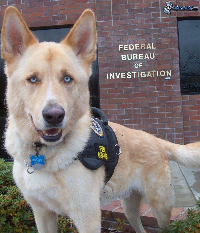 wilczur, FBI
