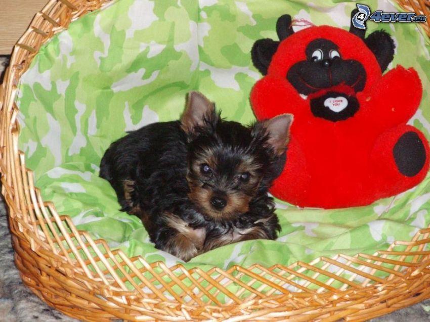 Yorkshire Terrier, pies w koszyku, pluszowa zabawka