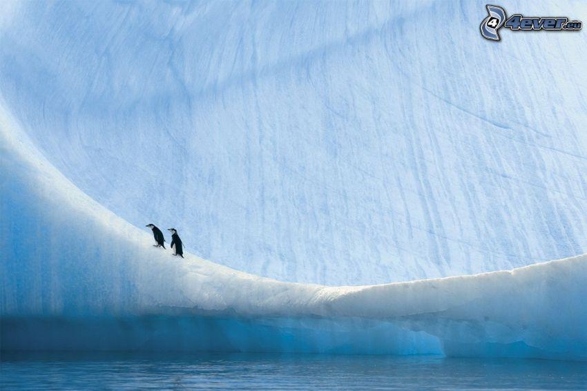 pingwiny, lodowiec