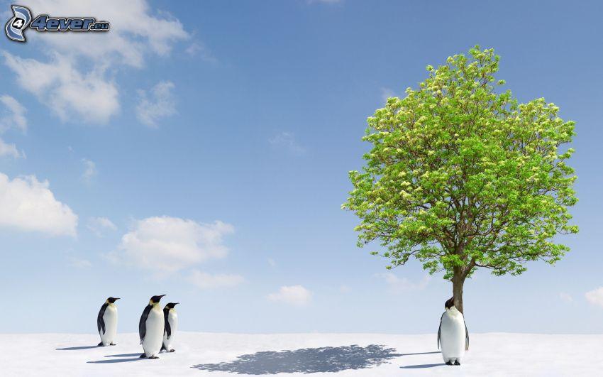 pingwiny, samotne drzewo