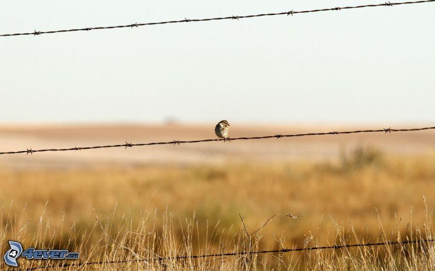 drut kolczasty, ogrodzenie z drutu, ptaszek, sucha trawa