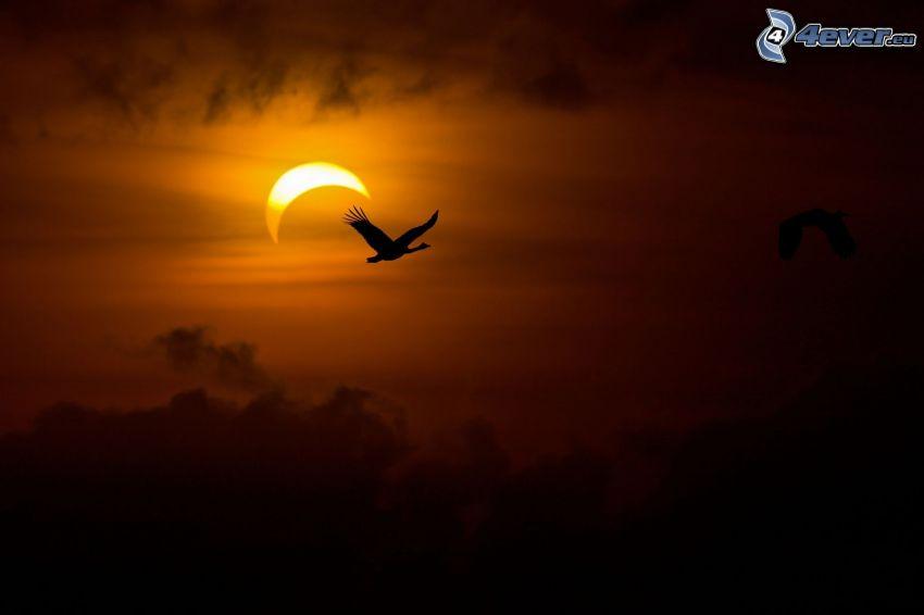 gęś, lot, sylwetka, księżyc