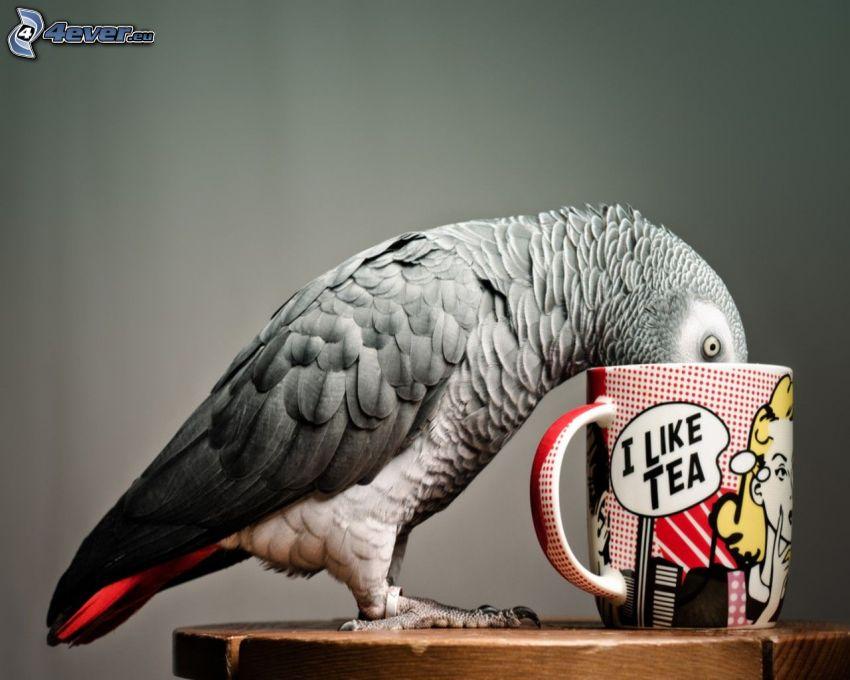 papuga, filiżanka