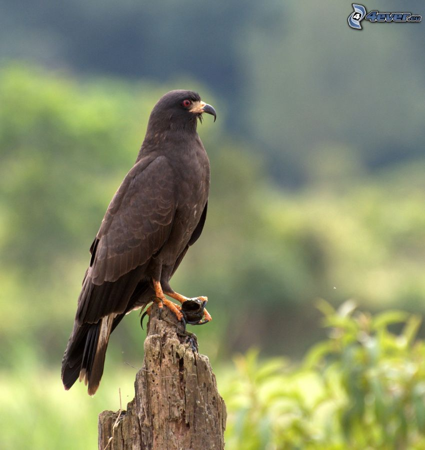 ptak, drewno