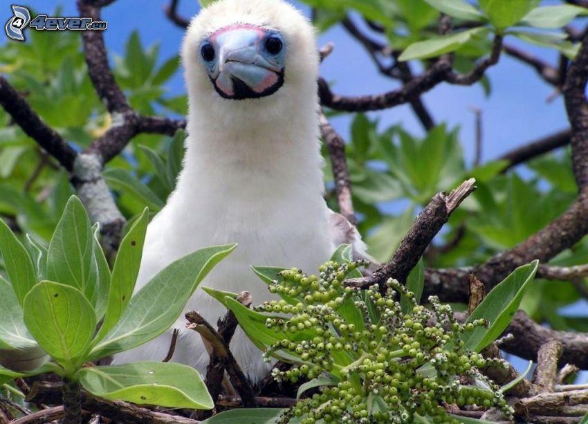 ptak, drzewo