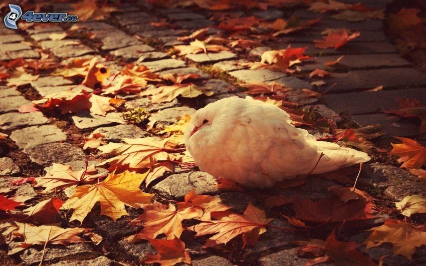 ptak, opadnięte liście