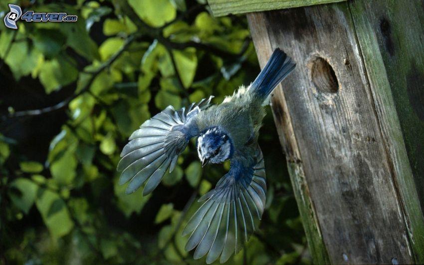 ptak, skrzydła, lot, budka dla ptaków