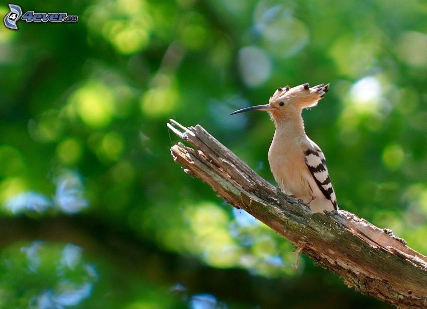 ptaszek, drewno