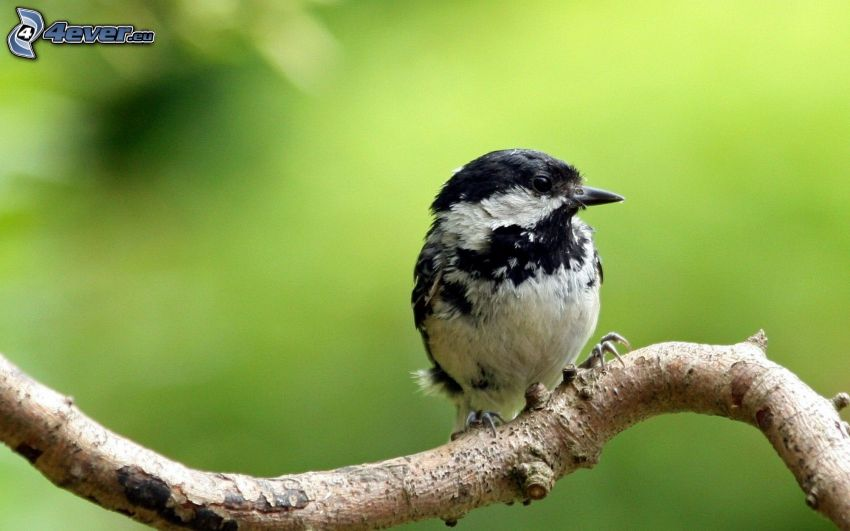 ptaszek na gałęzi