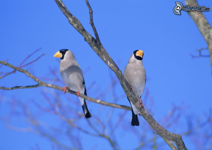 ptaszki na gałęzi