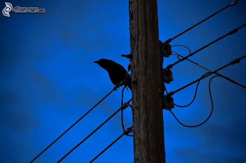 wrona, sylwetka ptaka, kable eletryczne