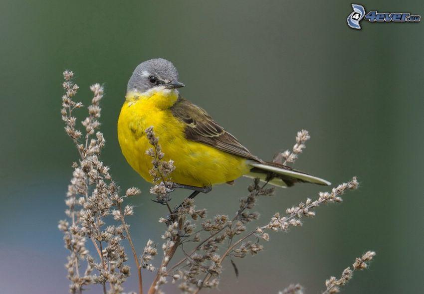żółty ptak, roślina