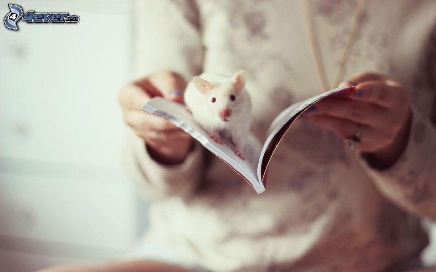 szczur, książka, ręce