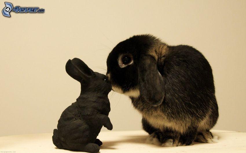 czarny królik, zajączek