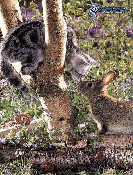 kot na gałęzi, zajączek, pocałunek