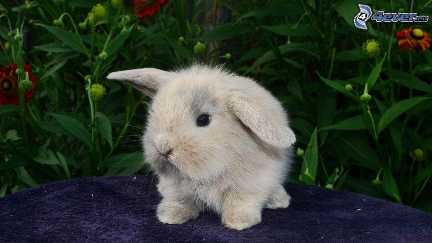 mały króliczek, rośliny