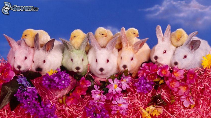 wiosna, zajączki, kurczątka, fioletowe kwiaty, różowe kwiaty