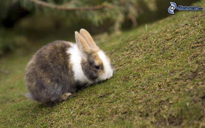 zając na trawie