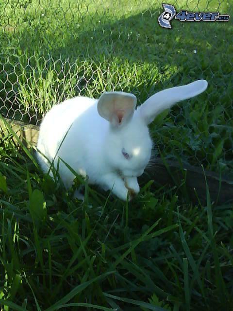 zajączek w trawie