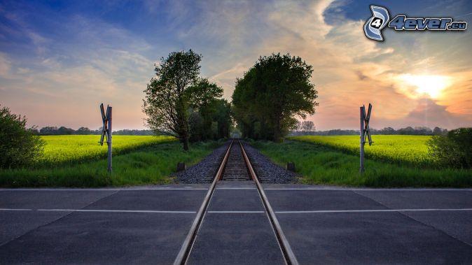 železničné priecestie, koľajnice, dopravné značky, repka olejná, stromová alej