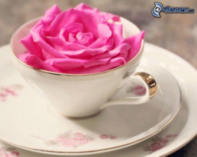ružová ruža, šálka