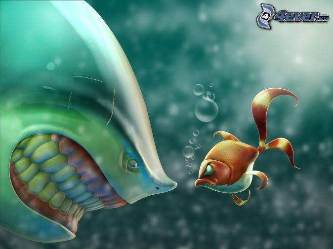 oranžovo-biela rybka, žralok, zuby, pohľad