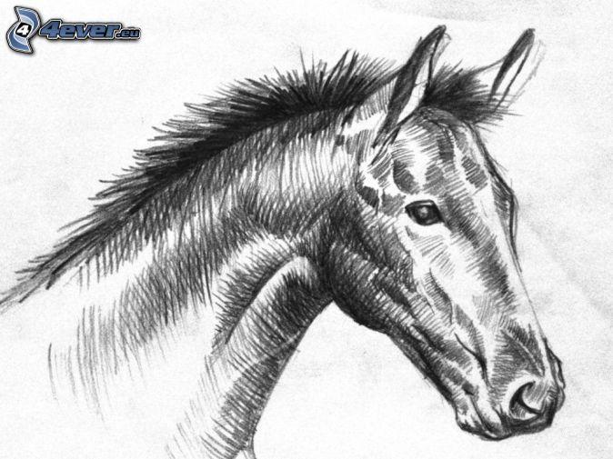 kôň, čiernobiele